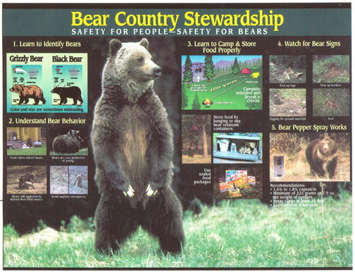 Hiking in Bear Country Display