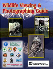 Wildlife Viewing and Photographing Guide brochure